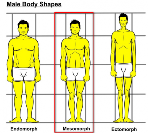 ectomorph body type